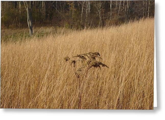 Dry Grass Greeting Card by David Fiske