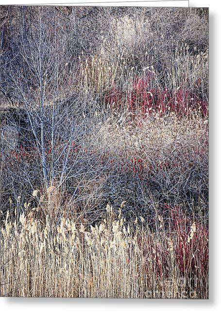 Dry Grasses And Bare Trees Greeting Card