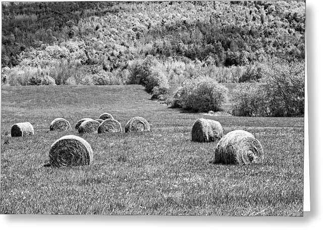Dry Hay Bales In Maine Farm Field Greeting Card