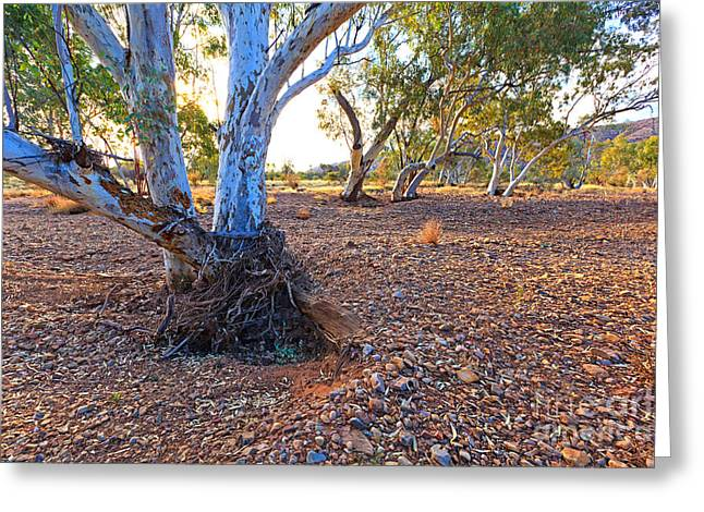 Dry Outback Creek Bed Greeting Card by Bill  Robinson