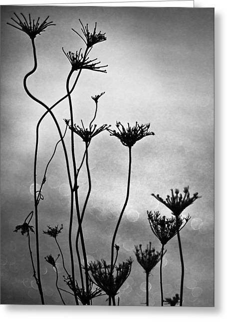 Greeting Card featuring the photograph Dry Plants by Arkady Kunysz