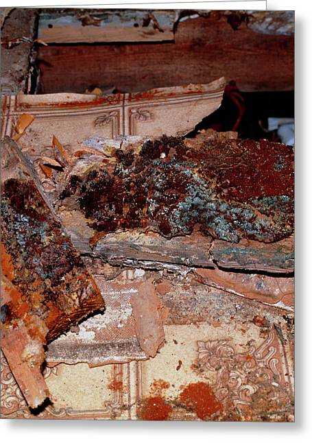 Dry Rot Under Floorboards Of A House Greeting Card