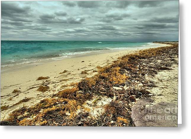 Dry Tortugas Beach Greeting Card by Adam Jewell