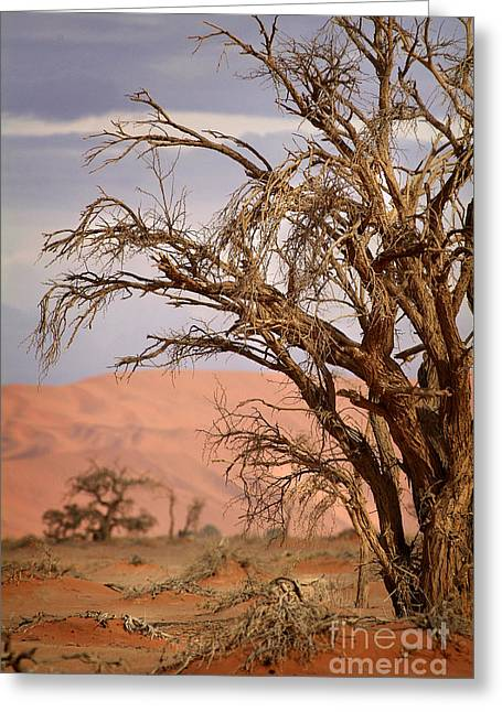 Dry Tree In The Desert Greeting Card