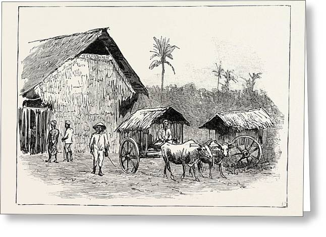 Drying Sheds For Tobacco, Sumatra, Indonesia Greeting Card