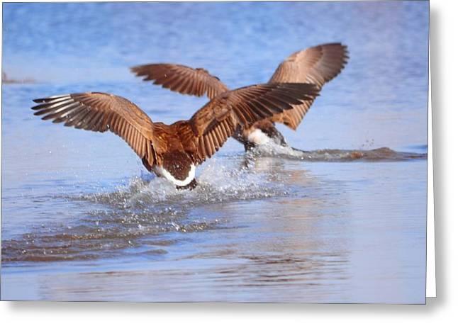Dual Landing Greeting Card by Valarie Davis
