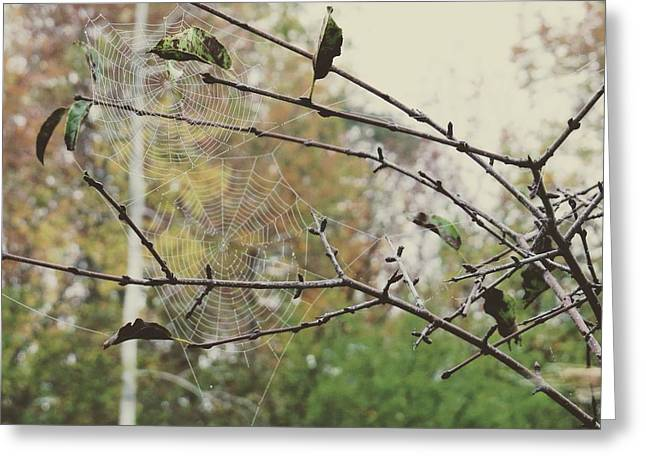 Greeting Card featuring the photograph Dual Webs by Nikki McInnes