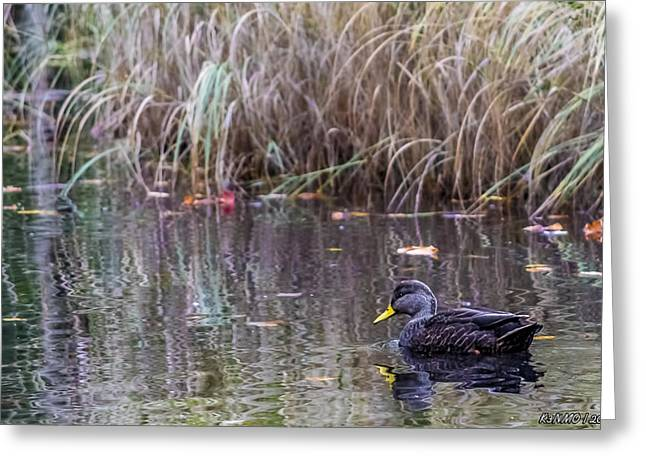Duck At Heart Shaped Pond Greeting Card by Ken Morris