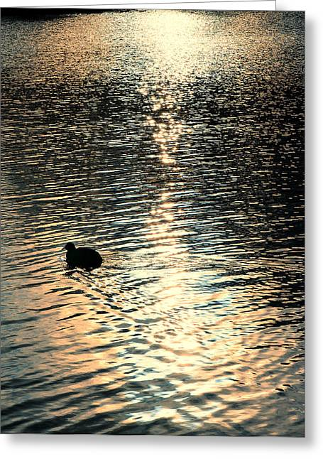 Greeting Card featuring the photograph Duck At Sunset by Marwan Khoury