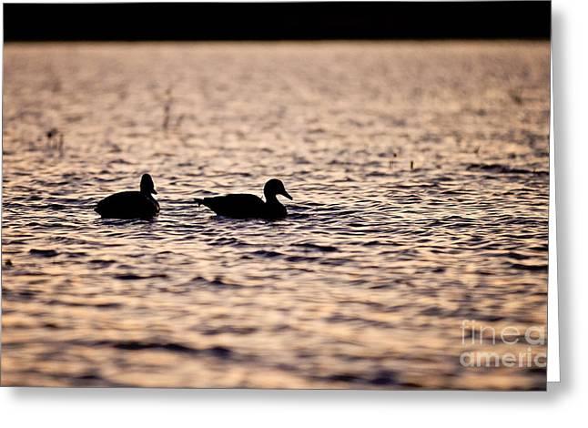 Duck Decoys Greeting Card
