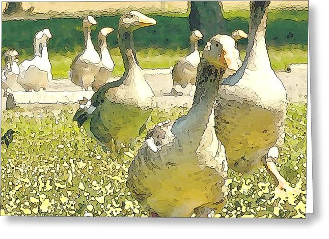 Duck Duck Goose Greeting Card by Artist and Photographer Laura Wrede
