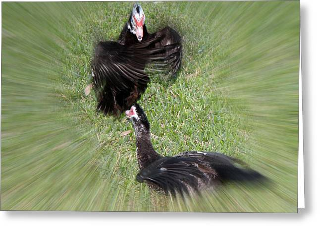 Duck Duel Greeting Card by Audrey Robillard