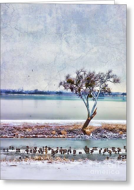 Duck Dynasty Greeting Card by Betty LaRue