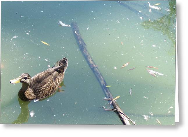 Duck In Pond Greeting Card