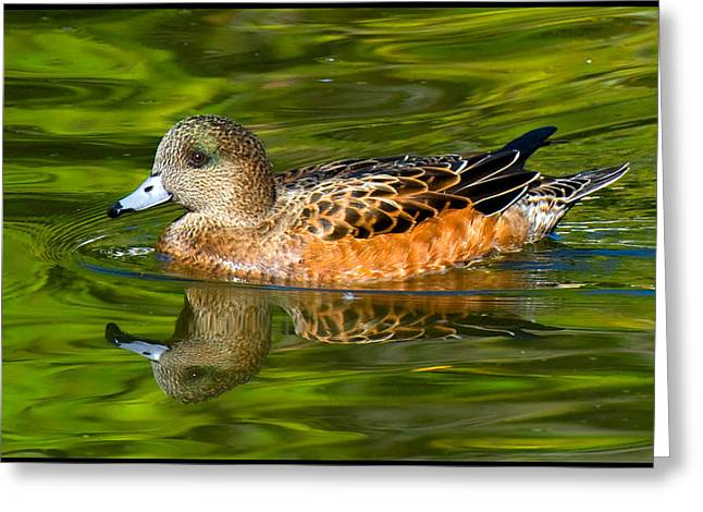 Young Female Mallard Duck Greeting Card