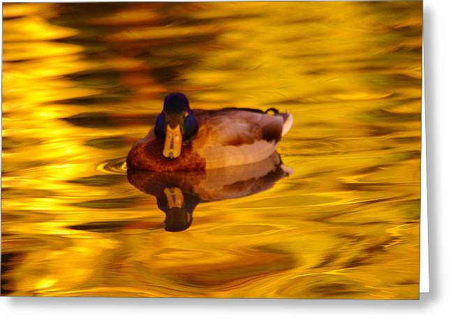 Duck On Golden Water Greeting Card