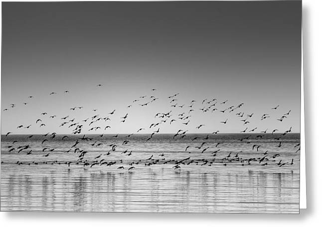 Duck Over Lake 1 B_w Greeting Card