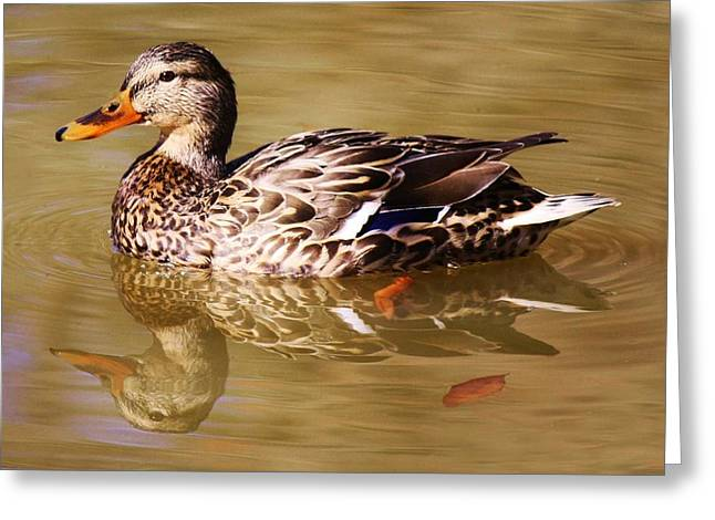 Duck Reflection Greeting Card by Paulette Thomas