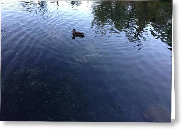 Duck Greeting Card by Ron Torborg