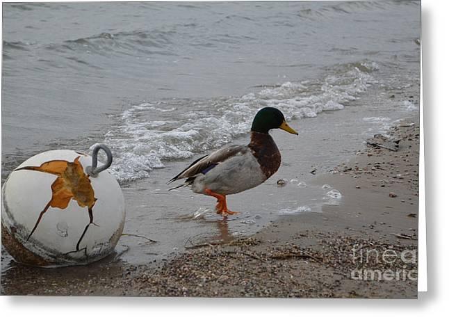 Duckie Duckie Greeting Card by Renie Rutten