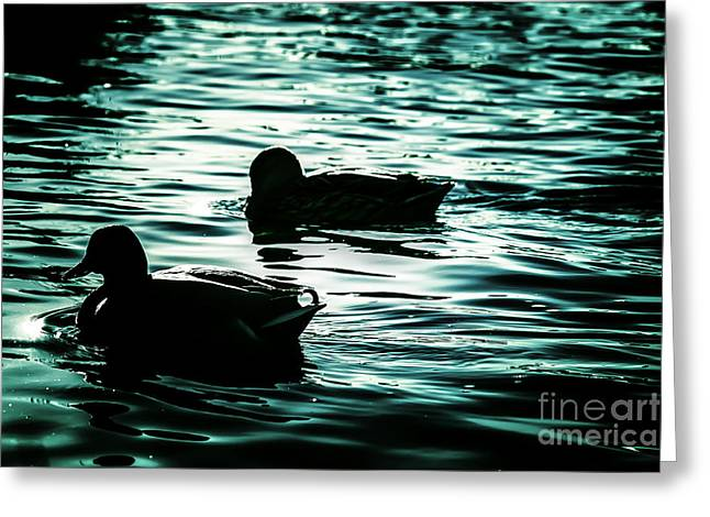 Duckies Greeting Card by Arlene Sundby
