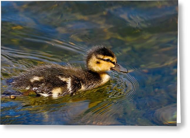 Duckling Greeting Card