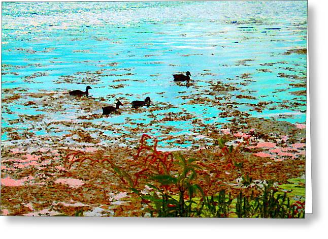 Ducklings On The Shore St Lawrence River Lachine Canal Art Of Quebec Landscapes Carole Spandau Greeting Card by Carole Spandau