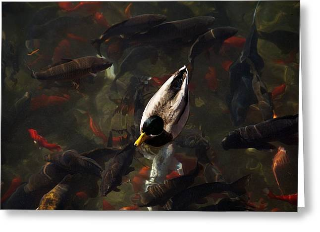 Ducks And Fish Greeting Card by Bonita Hensley