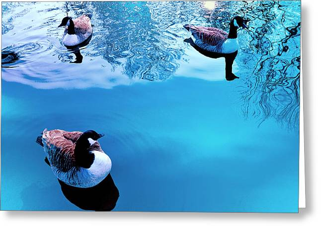 Greeting Card featuring the photograph Ducks At Pond by Marwan Khoury