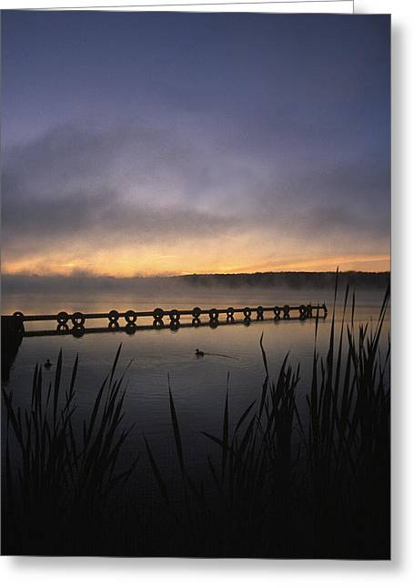 Ducks Dock And Reeds Greeting Card