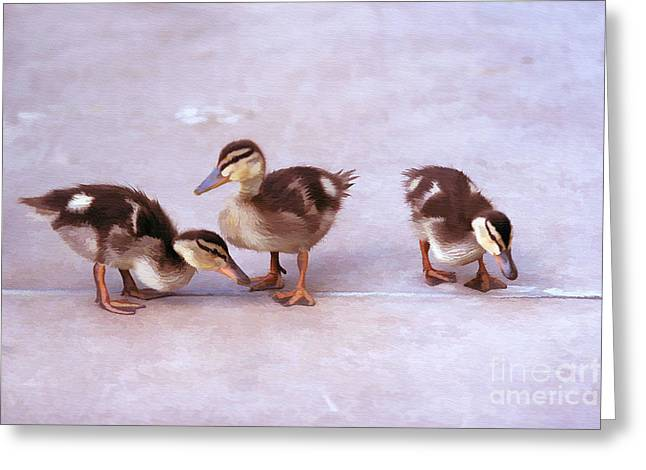 Ducks In A Row Greeting Card by Clare VanderVeen