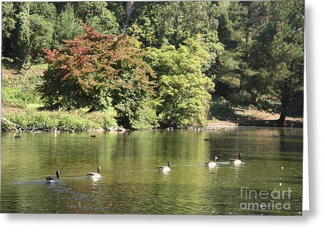 Greeting Card featuring the photograph Geese In A Row by Cynthia Marcopulos