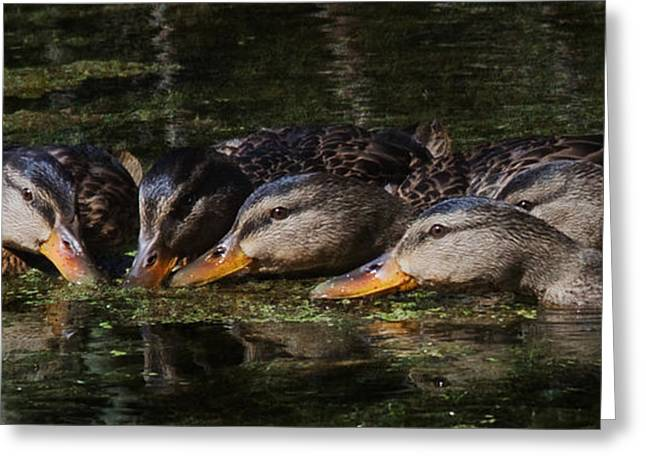 Greeting Card featuring the photograph Ducks In A Row by Jan Piller