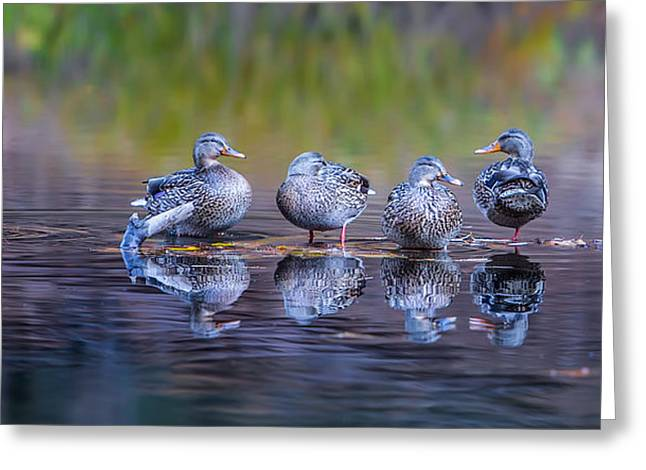 Ducks In A Row Greeting Card by Larry Marshall