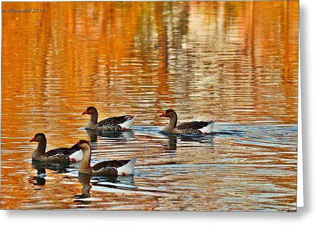 Greeting Card featuring the photograph Ducks In The Fall by Lynn Hopwood