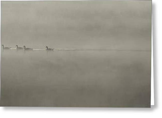 Geese In The Mist Greeting Card