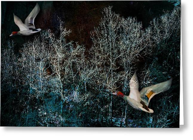 Greeting Card featuring the photograph Ducks In Trees West Fork Number Three by Bob Coates