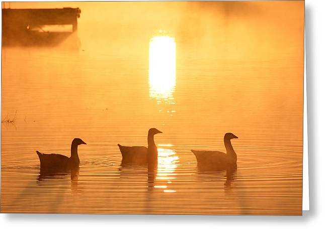 Ducks On A Foggy Lake At Sunrise Greeting Card