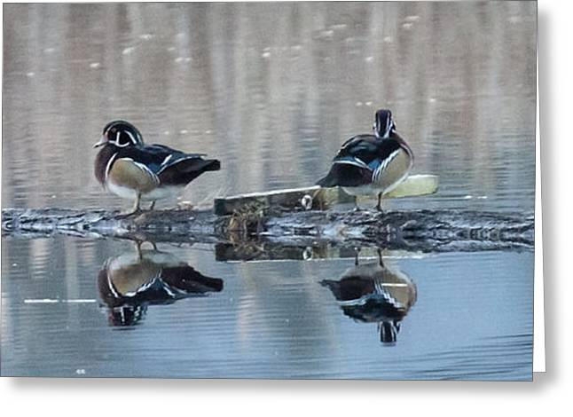 Ducks On A Log Greeting Card