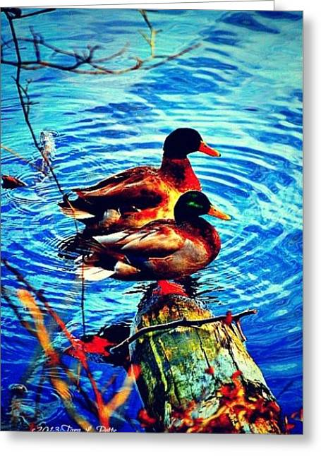 Greeting Card featuring the photograph Ducks On A Log by Tara Potts