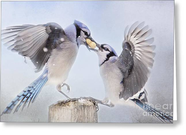 Dueling Jays Greeting Card