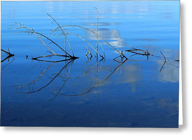 Duet Of The Branch And The Lake Greeting Card