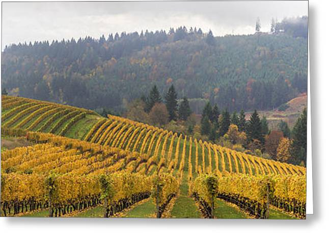 Dundee Oregon Vineyards Scenic Panorama Greeting Card