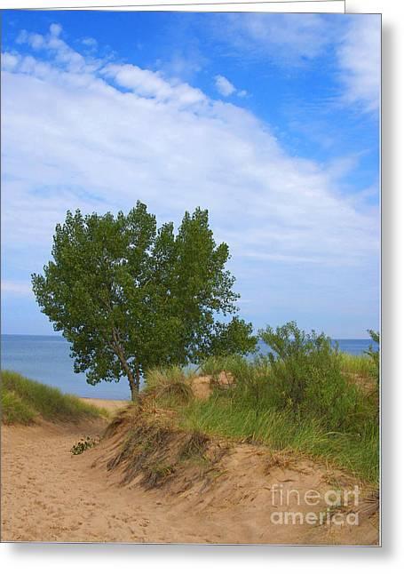 Dune - Indiana Lakeshore Greeting Card