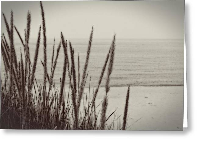 Dune Grass In Early Spring Greeting Card
