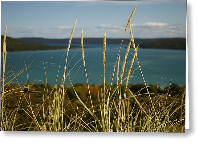 Dune Grass On A Sunny Fall Day Greeting Card