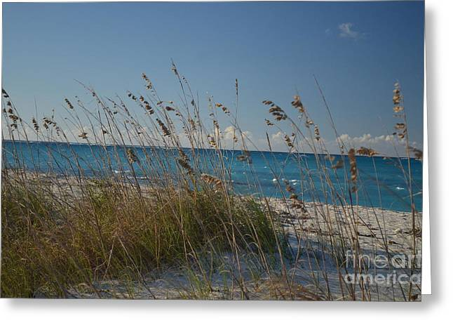 Dune Grasses Greeting Card by Judy Wolinsky