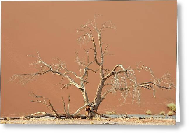 Dune In Namib-naukluft National Park Greeting Card by Tony Camacho