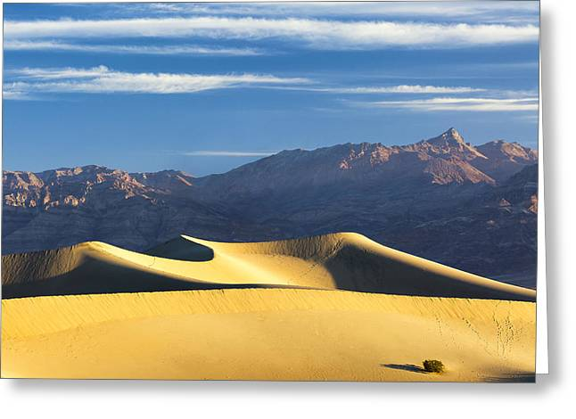Greeting Card featuring the photograph Dune Light by Patrick Downey