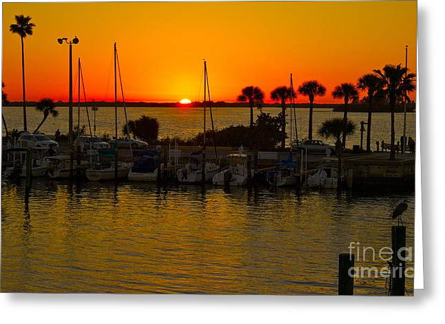 Dunedin Sunset Greeting Card by Alice Mainville